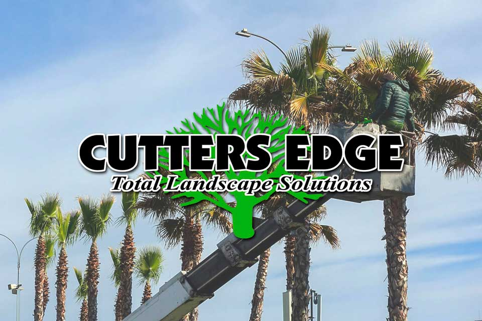Cutters Edge - Client - Digital Marketing Solutions - Design 106
